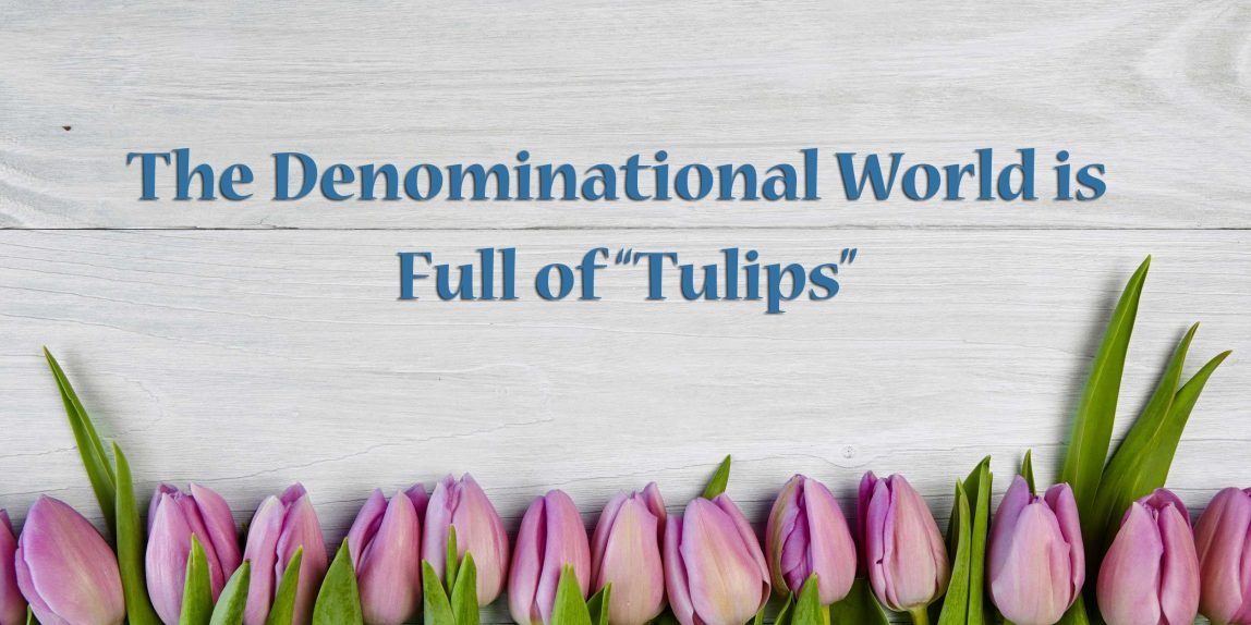 image - the denominational world is full of tulips - calvinism